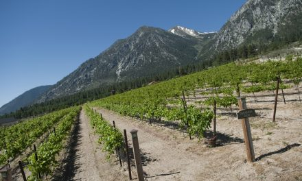 Nevada and Wineries and Bordellos, Oh My!