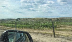 Driving Along Vineyards