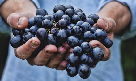 The Nevada Senate, Winery Law & Me – I Have No Juice
