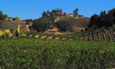Just What *Is* Wine Country?