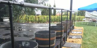 Pahrump Grape Stomp Barrels