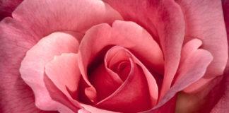 Rose Wine for Summer