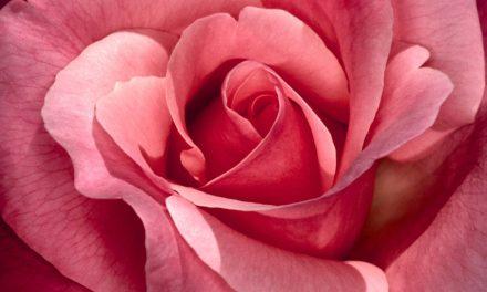 A Tale of Three Rosés