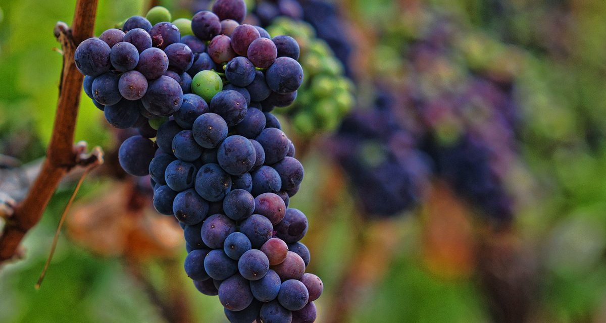Vertical: Passion and Pinot on the Oregon Wine Trail – the Review (Rant)