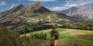 South African wine estates