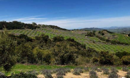 Spring in Paso – Visiting Friends, Old and New