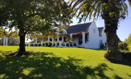 Honeymoon, Africa, Cape Town, and Wine! (Part 3 – More Wineries!)