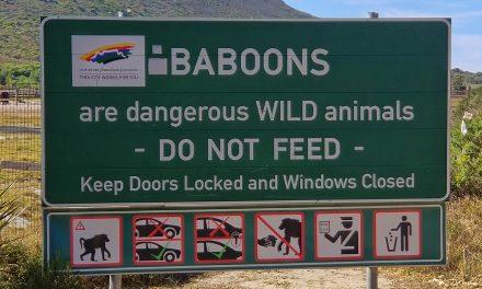 Honeymoon, Africa, Cape Town, and Wine! (Part 2 – Stellenbosch)
