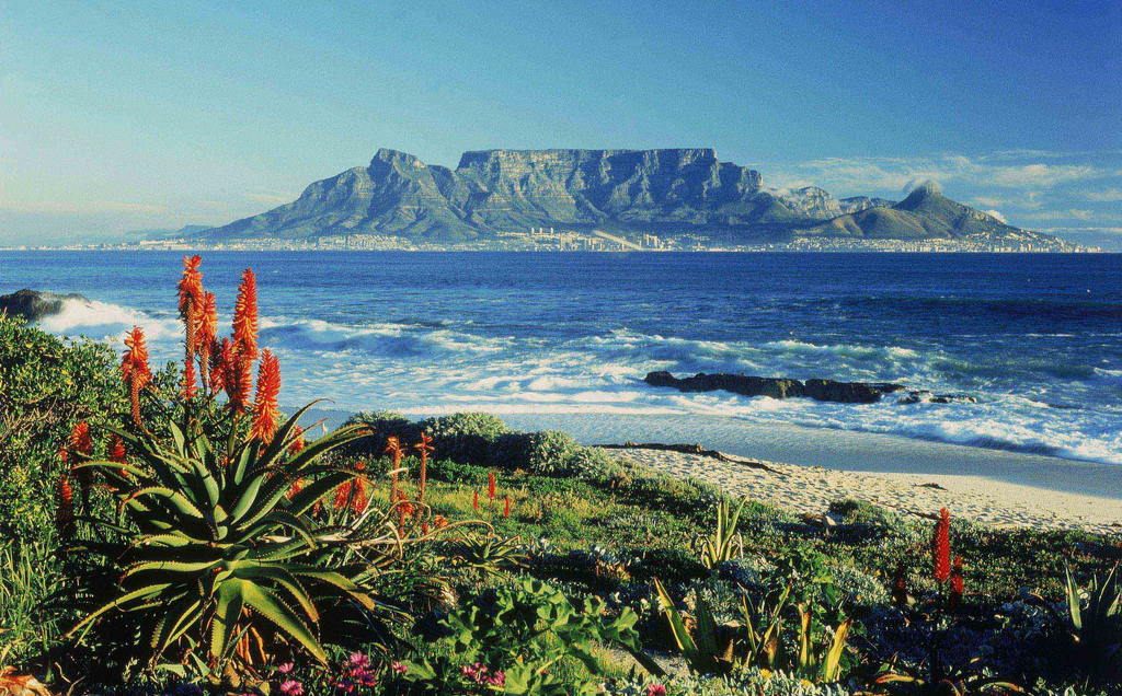 Honeymoon, Africa, Cape Town, and Wine!