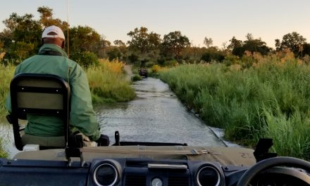 Honeymoon, Africa, Cape Town, and Wine! (Part Seven – Safari Week)